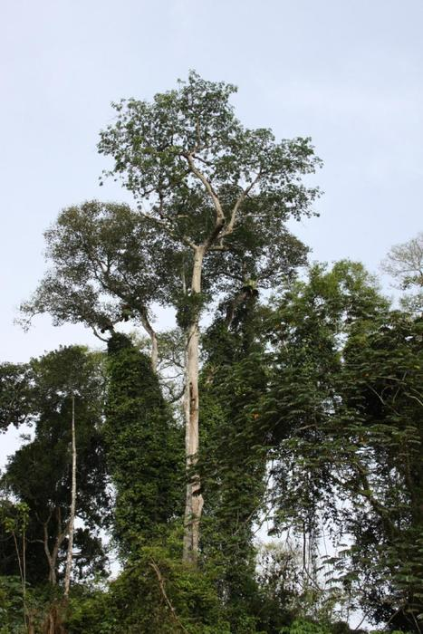 Risk of tree species disappearing in central Africa 'a major concern,' say researchers | Gaia Diary | Scoop.it