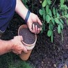 Buy flower seeds online, Flower seeds online, Garden seeds, Flower seeds, Herb seeds