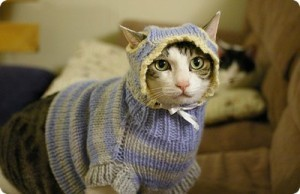 Top 28 des photos de chats avec des pulls, ou le web ultra classe | Funny and crazy cats | Scoop.it