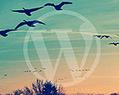 Crowdsourcing Curation #ThemeForest | Negocios&MarketingDigital | Scoop.it