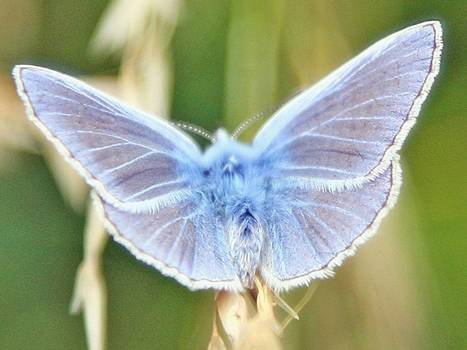 British butterfly species facing extinction after wettest summer   GMOs & FOOD, WATER & SOIL MATTERS   Scoop.it