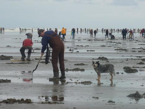 Warmer West Coast ocean conditions linked to increased risk of toxic shellfish | Aquaculture Directory | Aquaculture Directory | Scoop.it