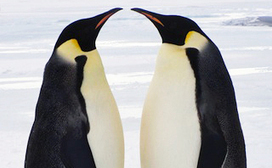 Google Penguin 2.1: Who Got Hit? | SEO Tips, Ad... | Search Engine Optimization-SEO | Scoop.it