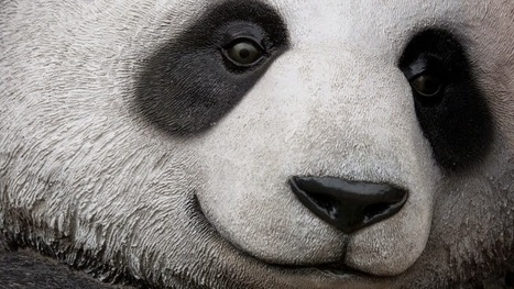 Techandmarket: Panda 4.1 - Google's 27th Panda Update - Is Rolling Out | Technology and Marketing | Scoop.it