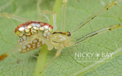 La hipnotizante belleza de la araña espejo de Singapur (FOTOS) - Ecoosfera | Bichos en Clase | Scoop.it