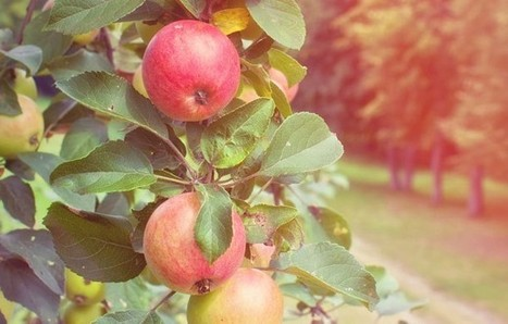 Remember, It May Take Time for Employees to Bear Fruit | Entrepreneurship in the World | Scoop.it