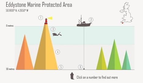 Eddystone report   Marine Conservation Society   Amocean OceanScoops   Scoop.it