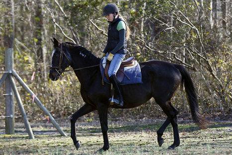 Woman's horse rescued from 'kill pen' - Fort Worth Star Telegram | Women In Media | Scoop.it