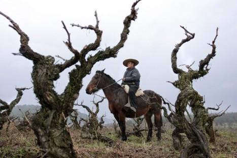 1manuelcabello.sommelier: Top Chilean Wine region | Route des vins | Scoop.it