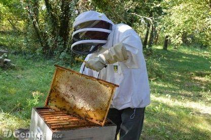 """Récolte du miel dans la Nièvre : """"la pire année depuis la grande sécheresse de 1976 """"   Abeilles, intoxications et informations   Scoop.it"""