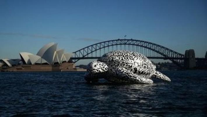 Giant turtle cruises Sydney Harbour   BBC   Kiosque du monde : Océanie   Scoop.it