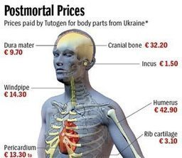 Price Of Your Organs In The Black Market Tiss