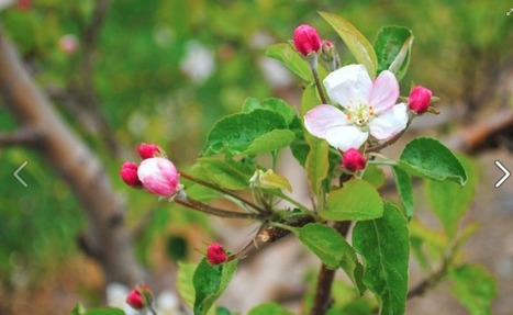 Sietsema Orchards to host fruit tree planting workshop  | The Rapidian | Eat Local West Michigan | Scoop.it