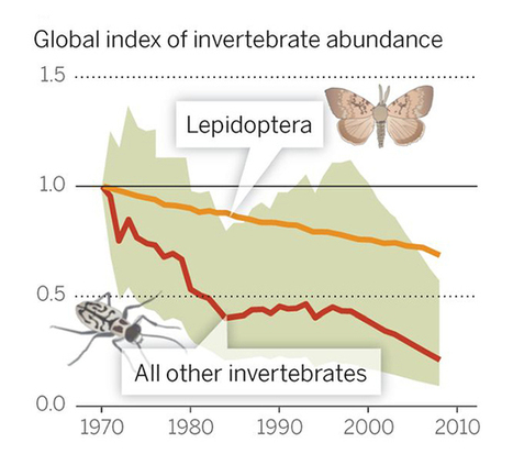 Vanishing Act: What's Causing Sharp Decline in Insects and Why It Matters by Christian Schwägerl | Earth Citizens Perspective | Scoop.it