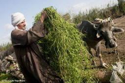 La FAO tire la sonnette d'alarme sur la malnutrition au Proche-Orient et en Afrique du Nord