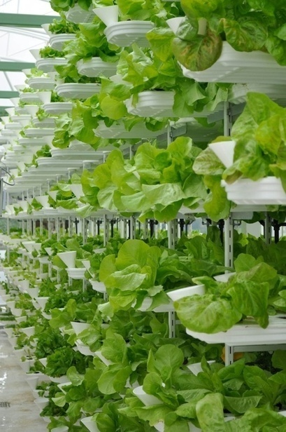 Salad in the sky: The rise of the vertical farm? | Urban- city- vertical farming - Green cities | Scoop.it
