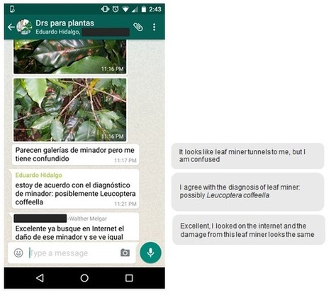 Plant doctors share advice using WhatsApp and Facebook in Central America | Tech in agriculture | Scoop.it
