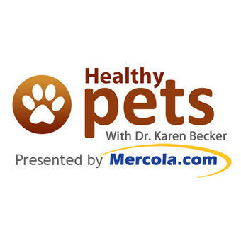 Vets and Groomers, Be Aware of Pet Anal Gland Problems | cats & dogs! | Scoop.it
