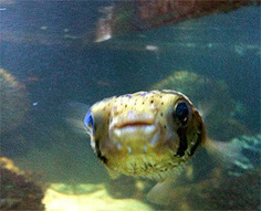 Carbon Dioxide Affecting Fish Brains   OUR OCEANS NEED US   Scoop.it