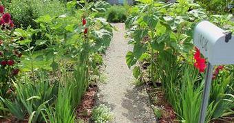 Edible Front Yard Gardens!   edible landscaping   Scoop.it