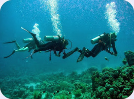 SCUBA SCOOP/latest dive stories: Secrets to Saving Air | All about water, the oceans, environmental issues | Scoop.it