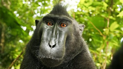 Monkeys take photos with camera stolen from photographer David Slater   Everything Photographic   Scoop.it