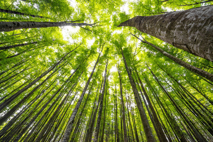Why Keeping Mature Forests Intact Is Key to the Climate Fight