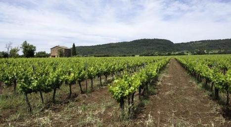 Planter ses vignes en ligne | Le Vin et + encore | Scoop.it