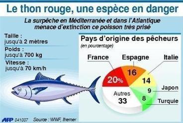 L'Europe agit pour préserver le thon rouge.  | agro-media.fr | Actualité de l'Industrie Agroalimentaire | agro-media.fr | Scoop.it