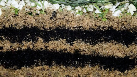 This Time-Lapse Video Of Worms Making Compost Is Awesome | Organic Farming | Scoop.it