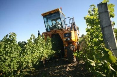 Vignoble du cognac : les vendanges débuteront lundi 7 octobre | Petit détour en Charentes au pays du Cognac | Scoop.it