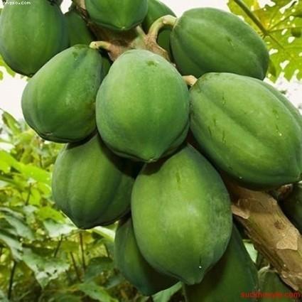 3 loại trái cây 'không đội trời chung' với sỏi thận | SEO, BUSINESS, TAG | Scoop.it