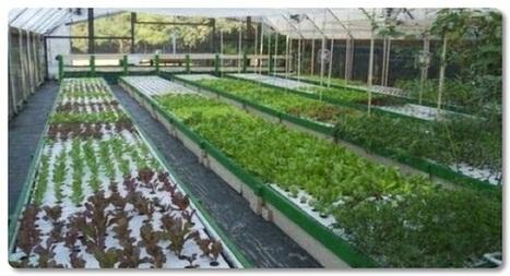 How to Run a Commercial Aquaponics System | Aquaponics~Aquaculture~Fish~Food | Scoop.it