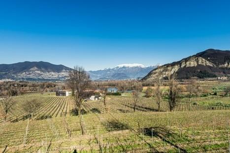Franciacorta sales rise despite 'complex' climate | Grande Passione | Scoop.it