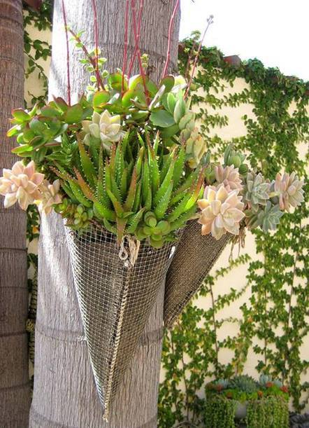 Hang a succulent garden | Gardening Inspiration and Information | Scoop.it