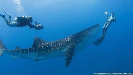 5 Myths about Scuba Diving | Scuba Diving Adventures | Scoop.it