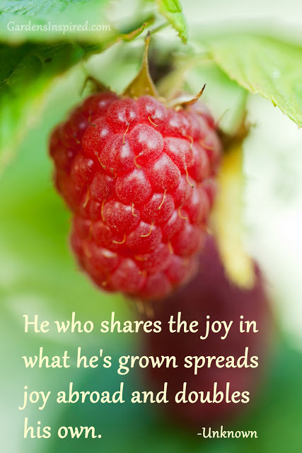 Another garden quote | The Muse | Scoop.it