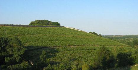 Tout est bio, tout est sauvage : le vin biodynamique (2/3) | Vins nature, Vin de plaisir | Scoop.it