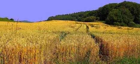 La Chine prend exemple sur la coopérative Cerepy - Agro Media   Actualité de l'Industrie Agroalimentaire   agro-media.fr   Scoop.it