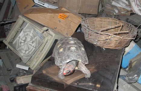 Family finds pet tortoise that was missing for 30 years as they clean out dead father's storeroom | This Gives Me Hope | Scoop.it