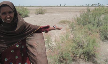 Salt-tolerant plants may help Pakistan reclaim ruined farms - AlertNet   Food issues   Scoop.it