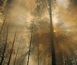 Measuring the consequence of forest fires on public health | Sustain Our Earth | Scoop.it