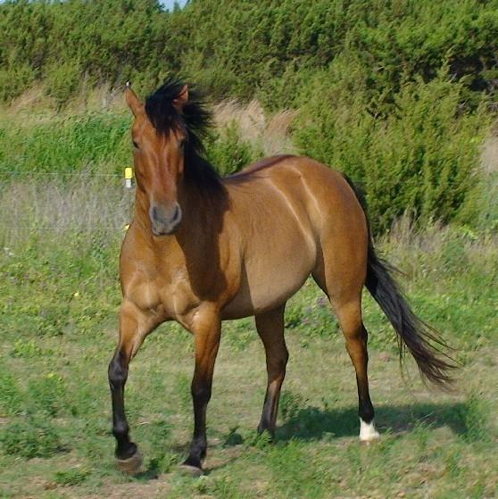 Equine Bodywork Scoop It
