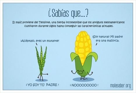 Del origen del maíz a los alimentos transgénicos | Puntos de referencia | Scoop.it