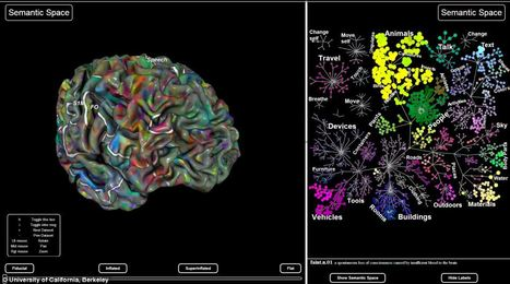 The astonishing maps that reveal how our brain organises everything we see | IKT och iPad i undervisningen | Scoop.it