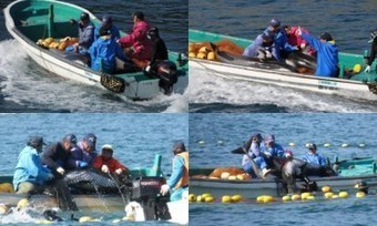 What is Kamogawa #SeaWorld's Connection to the Taiji Dolphin Hunt? Say No to The Importation of A Pacific White-Sided Dolphin | Rescue our Ocean's & it's species from Man's Pollution! | Scoop.it