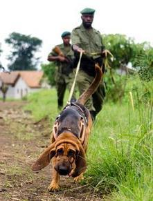 Man's (and now Rhino's) Best Friend | Help save our Rhinos | Scoop.it