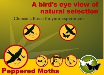 Peppered Moth Simulation | Teaching High School Genetics | Scoop.it