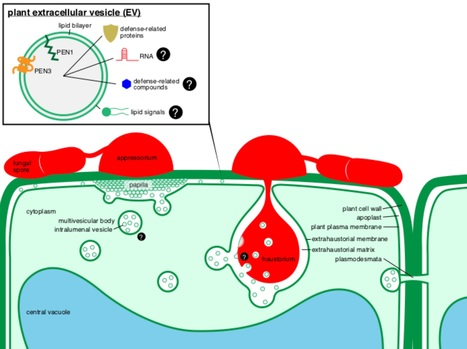 current opinion plant biology extracellular vesicles as key mediators of plantmicrobe interactions 2018