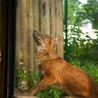 Are zoo's cruel to wild animals